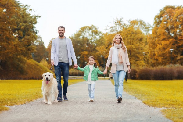 family, pet, domestic animal, season and people concept - happy family with labrador retriever dog walking in autumn park